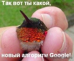 Hummingbird (Колибри) - новый алгоритм Google